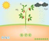 Sostanza nutriente di una pianta illustrazione vettoriale