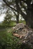 Sostegno o fungo di scaffale sull'albero morto in foresta con il reparto basso immagine stock libera da diritti