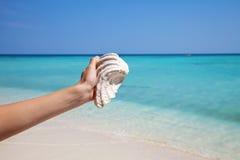 Sostener un mejillón en una playa exótica Fotografía de archivo
