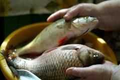 Sostener un pescado Fotografía de archivo libre de regalías