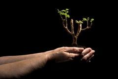 Sostener una nueva planta en manos Imágenes de archivo libres de regalías