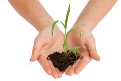Sostener una planta Imagen de archivo libre de regalías