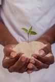 Sostener una planta Fotos de archivo
