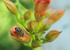 Sostenga la En-abeja Imagen de archivo