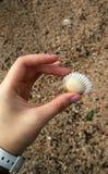 Sostenga Shell Fotos de archivo