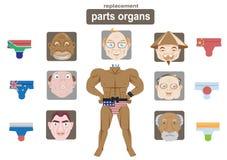 Sostituzione degli organi di parti Immagini Stock
