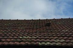 Sostituzione delle mattonelle di tetto sul vecchio tetto fotografia stock libera da diritti
