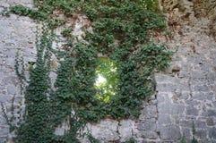 Soteska kasztel, Slovenia Obrazy Royalty Free