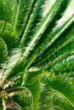 Sothern palm. Selective focus stock photo