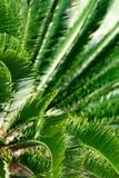Sothern palma Selekcyjna ostrość zdjęcie stock