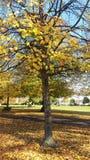 Soton-Herbst im Park Stockfoto