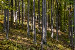 Sotrile Forest royalty free stock image