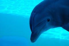 Sotto acqua Fotografia Stock