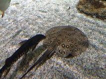Sotto acqua Immagini Stock