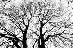 Sotto dell'albero della siluetta la foglia non su fondo bianco Fotografie Stock
