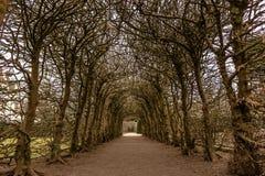 Sotto gli alberi fotografie stock