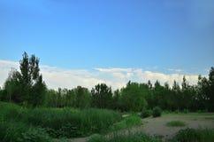 Sotto gli alberi delle nuvole di bianco e del cielo blu Fotografia Stock Libera da Diritti