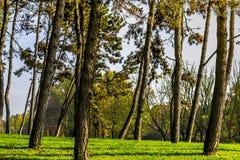 Sotto gli alberi in un parco a Torino Piemonte, l'Italia fotografia stock libera da diritti