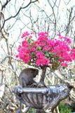 Sotto il bello albero Fotografia Stock Libera da Diritti