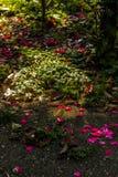 Sotto il cespuglio di rose Fotografia Stock Libera da Diritti