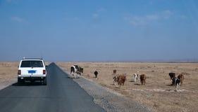 Sotto il cielo blu e la nuvola bianca Mongolia Interna Hunshandake Sandy Land Immagini Stock