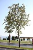Sotto il cielo luminoso gli alberi sono più brillanti immagine stock libera da diritti