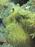 Sotto il mare Fotografia Stock