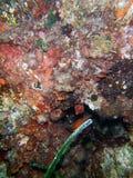 Sotto il mare Il Mediterraneo della scogliera immagini stock libere da diritti