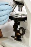 Sotto il microscopio fotografia stock
