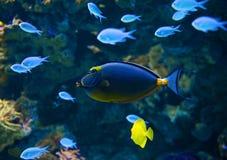 Sotto il mondo dell'acqua Immagine Stock