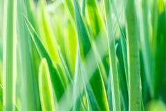 Sotto il sole luminoso Sfondi naturali astratti Fotografia Stock