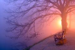 Sotto l'albero Immagini Stock