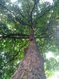 Sotto l'albero immagini stock libere da diritti