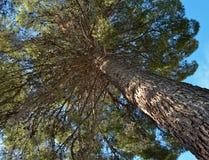 Sotto l'albero Fotografia Stock