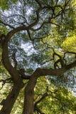 Sotto l'albero Fotografia Stock Libera da Diritti