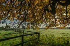 Sotto l'albero fotografie stock libere da diritti