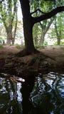 Sotto l'albero Fotografie Stock