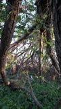 Sotto l'albero della tempesta fotografia stock