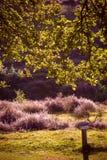 Sotto l'albero di quercia Immagine Stock