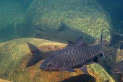 Sotto la cascata ed il grande pesce fotografie stock