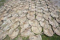 Sotto la foglia di palma tenuta in mano di morte leggera della foglia del fan del sole Immagine Stock
