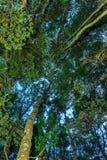 Sotto la foresta del faggio Immagini Stock