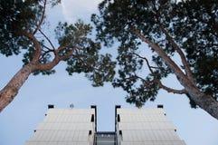 Sotto la vista di costruzione e degli alberi nel distretto di EUR a Roma immagini stock
