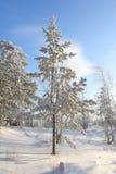 Sotto neve Immagine Stock