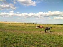 Sotto Texas Sky Fotografia Stock Libera da Diritti