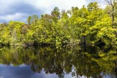 Sottobosco e radici della mangrovia Fotografie Stock