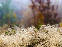 Sottobosco rugiadoso della foresta in autunno Priorità bassa vaga fotografie stock libere da diritti