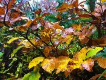 Sottobosco variopinto della foresta in autunno Priorità bassa vaga fotografia stock