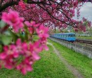 Sottopassaggio della primavera immagini stock