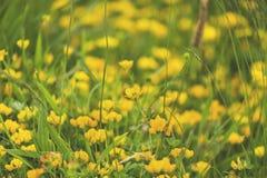 Sottragga ed offusca il fondo dei fiori di giallo della molla fotografie stock libere da diritti